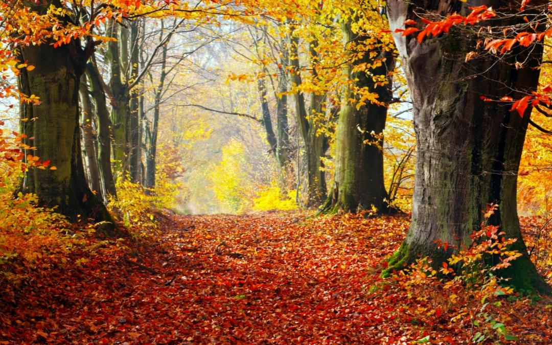 ¡Prepárate para los cambios del otoño con aceites esenciales!