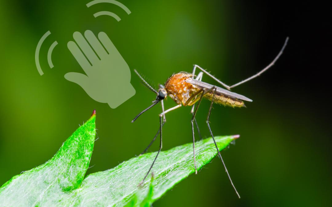 ¡Adiós mosquitos! 4 Ideas para repelerlos